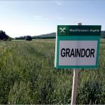 graindor
