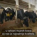 Proizvodni pokus s LGAN silažnim kukuruzom (Chorušice, Češka)