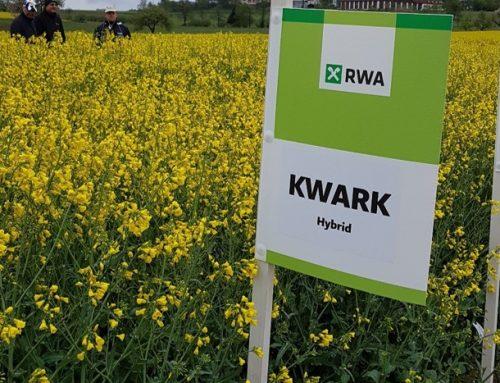 KWARK – hibrid uljane repice – NOVO !